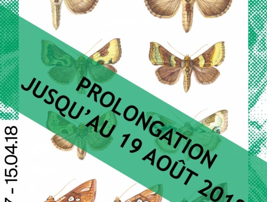 Accueil mus es cantonaux du valais for Les noctuelles